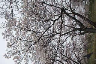水車の森blog